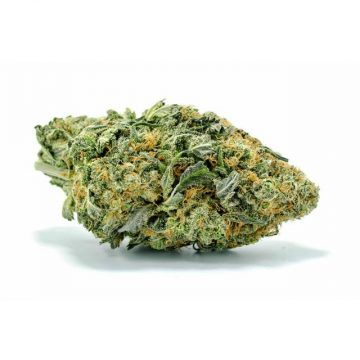 The aptly-named Big Bud is a predominantly indica hybrid that boasts huge, sticky flowers big bud strain .marijuana bud,big bud, weed bud buy weed online