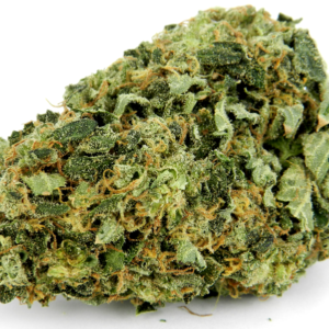 "Buy Island Sweet Skunk strian marijuana kush weed sometimes called Sweet Island Skunk, is a sativa strain energetic effects. The flavor is most easily describe as ""sweet skunk,"""